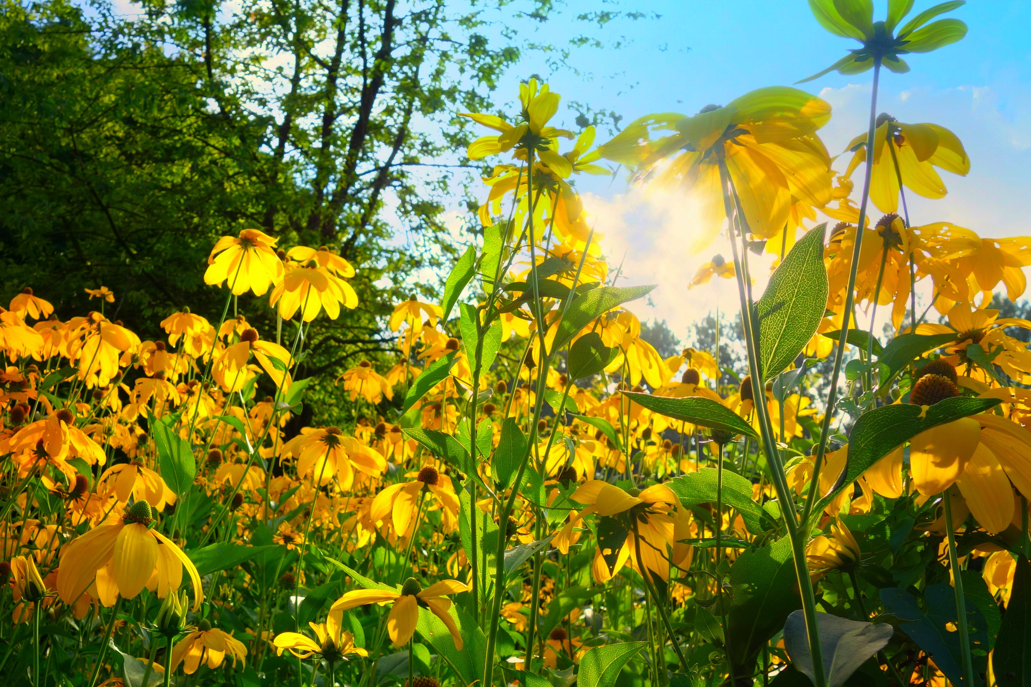Yellow Petaled Flower Bloom during Daytime