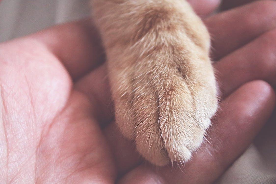 človek, domáce zviera, domáci