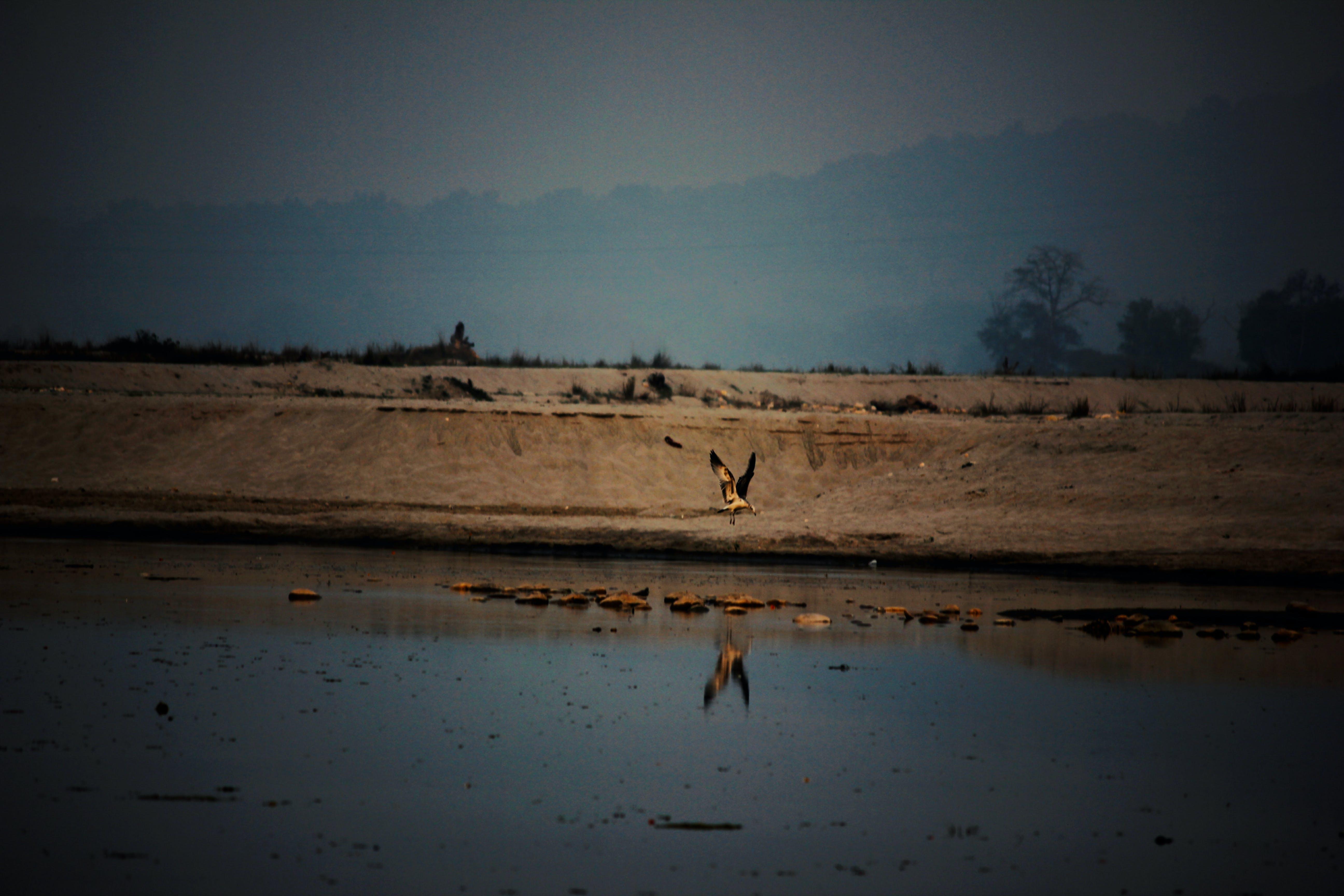 Free stock photo of beautiful view, bird, india