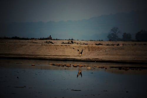 Fotobanka sbezplatnými fotkami na tému India