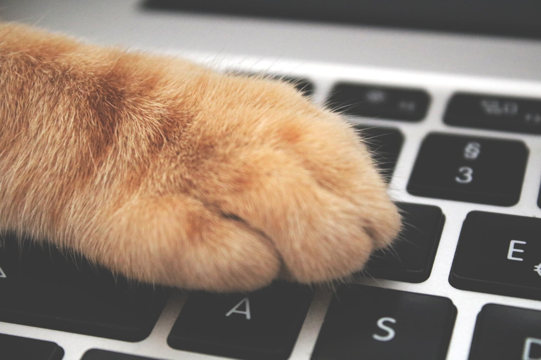 paw on keyboard