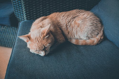 Orange Cat Lying on Chair