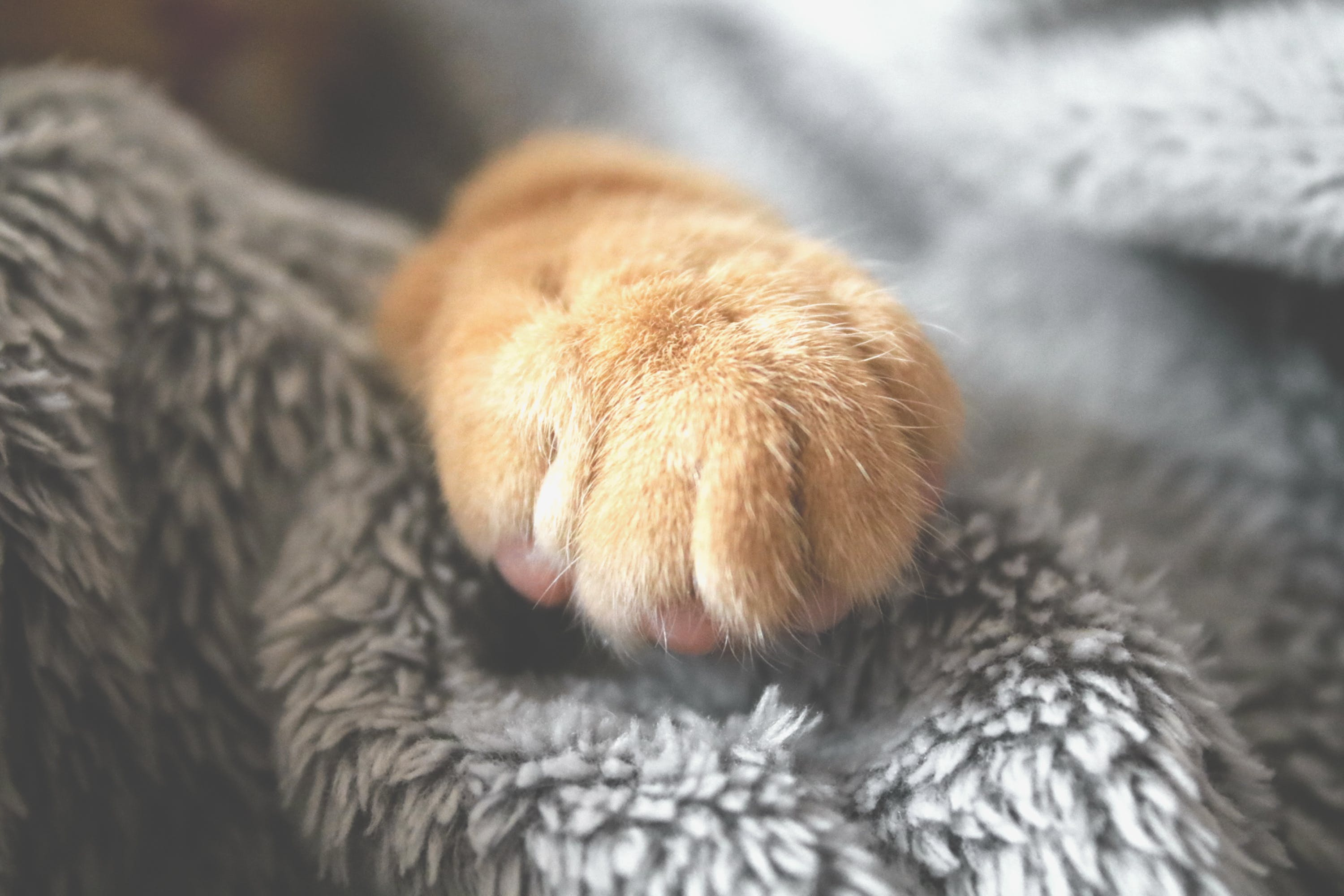 Selective Photo of Brown Pet Paw