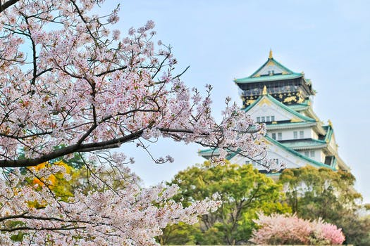 Visit Japan during cherry blossom