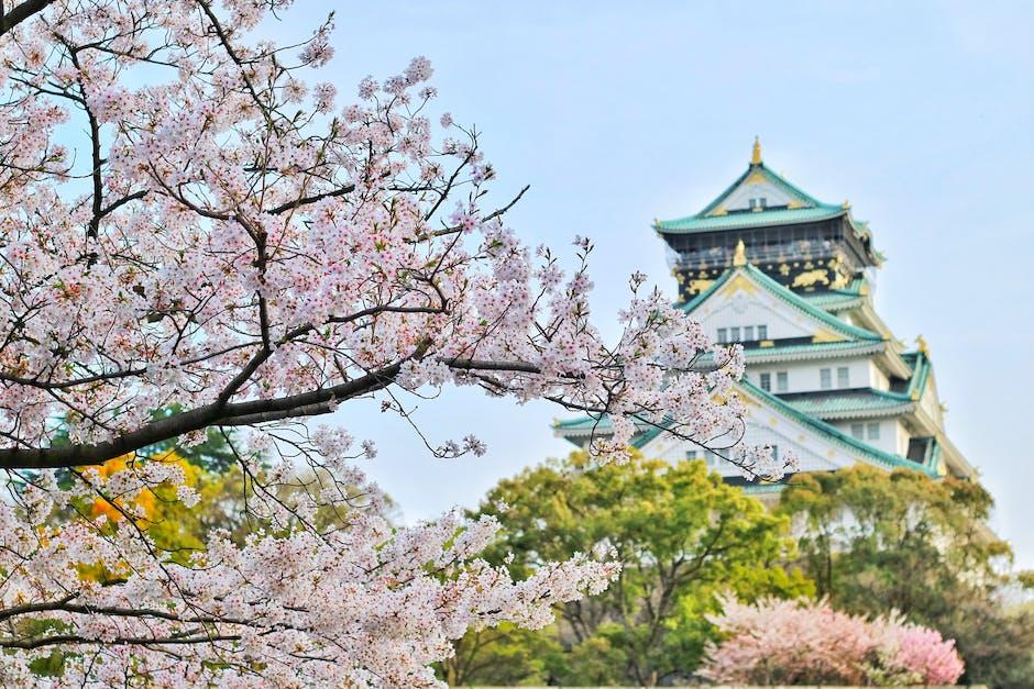 Sakura Arborism quest in Genshin Impact: A guide to locating Thunder Sakura locations easily