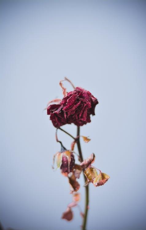 anlegg, blomst, dagslys