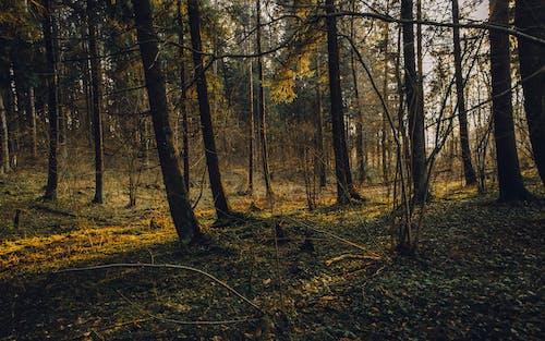 Foto d'estoc gratuïta de arbres, bonic, bosc, boscos