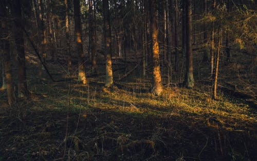 Photos gratuites de arbre, arbres, asters, atmosphère de soirée