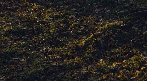 Photos gratuites de gros plan, herbe, moulu, paysage