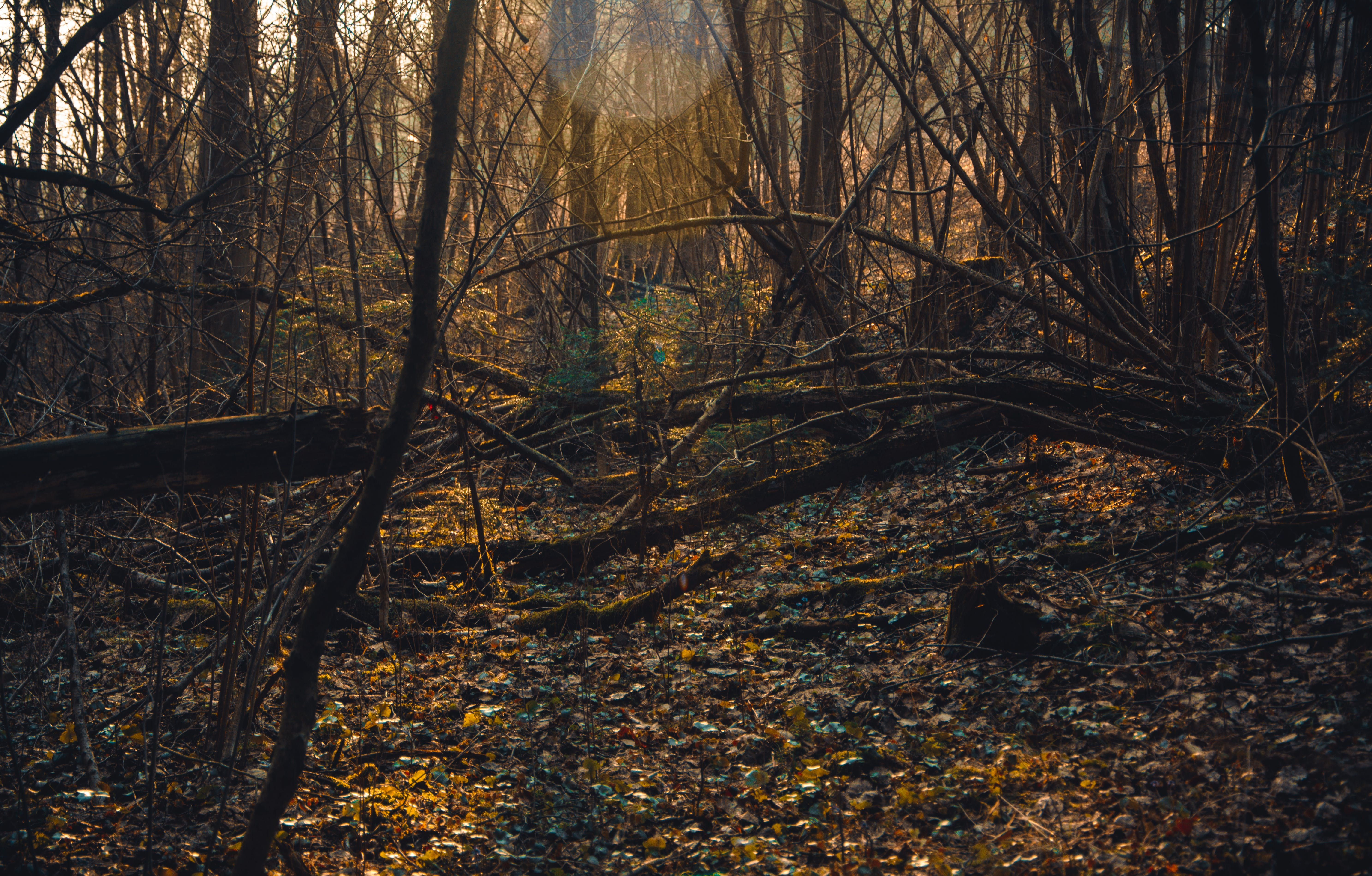 Photo of Brown Withered Trees