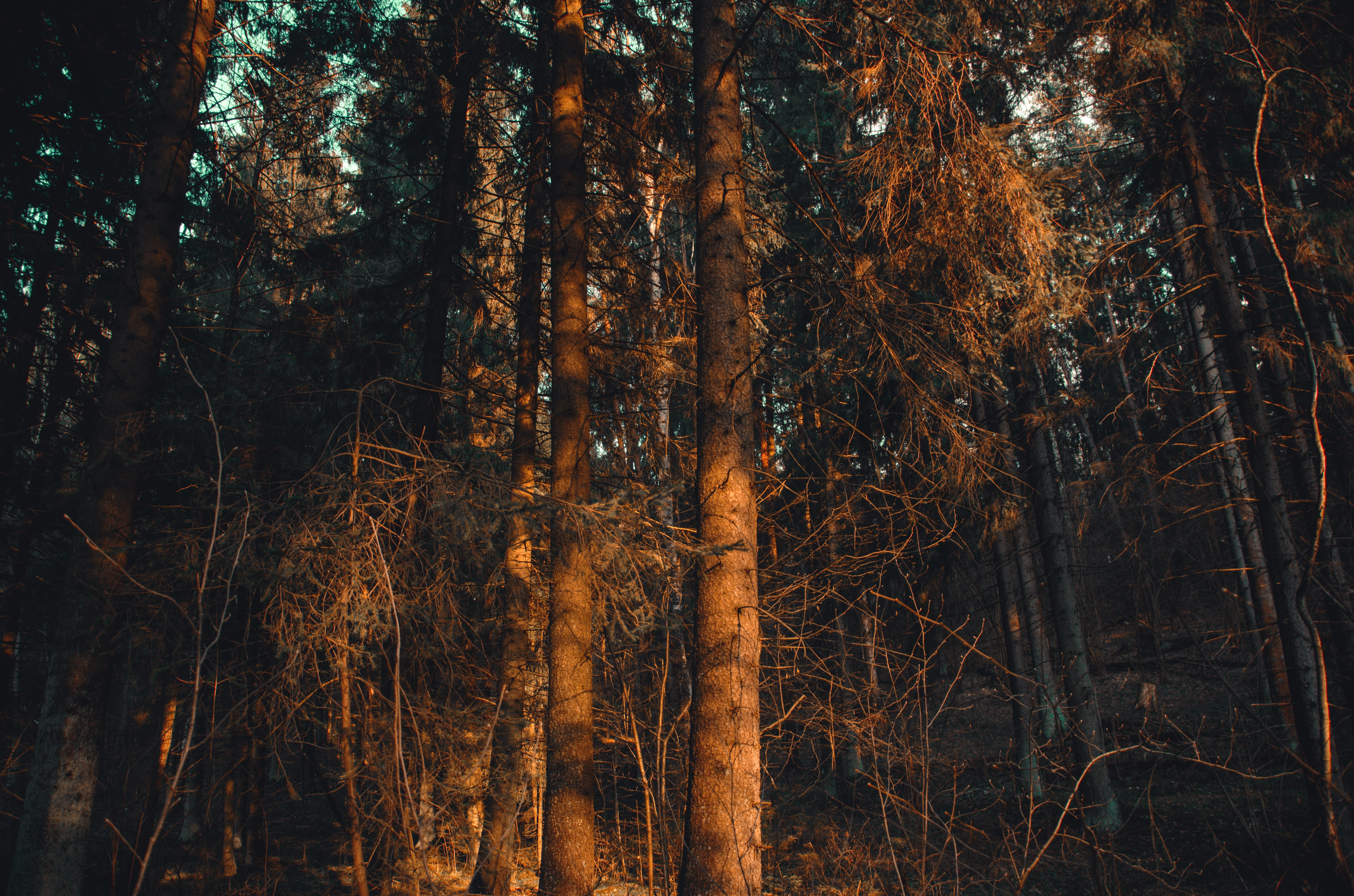 Photo of Forest during Sunset