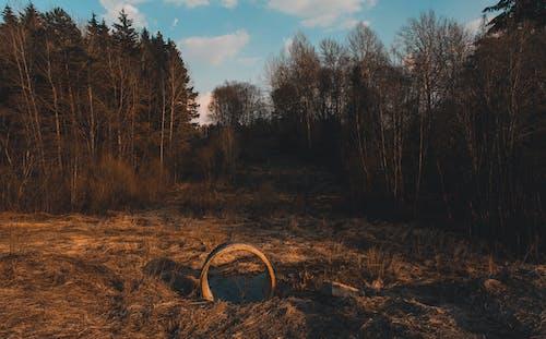 Photos gratuites de arbres, aube, clairière, environnement