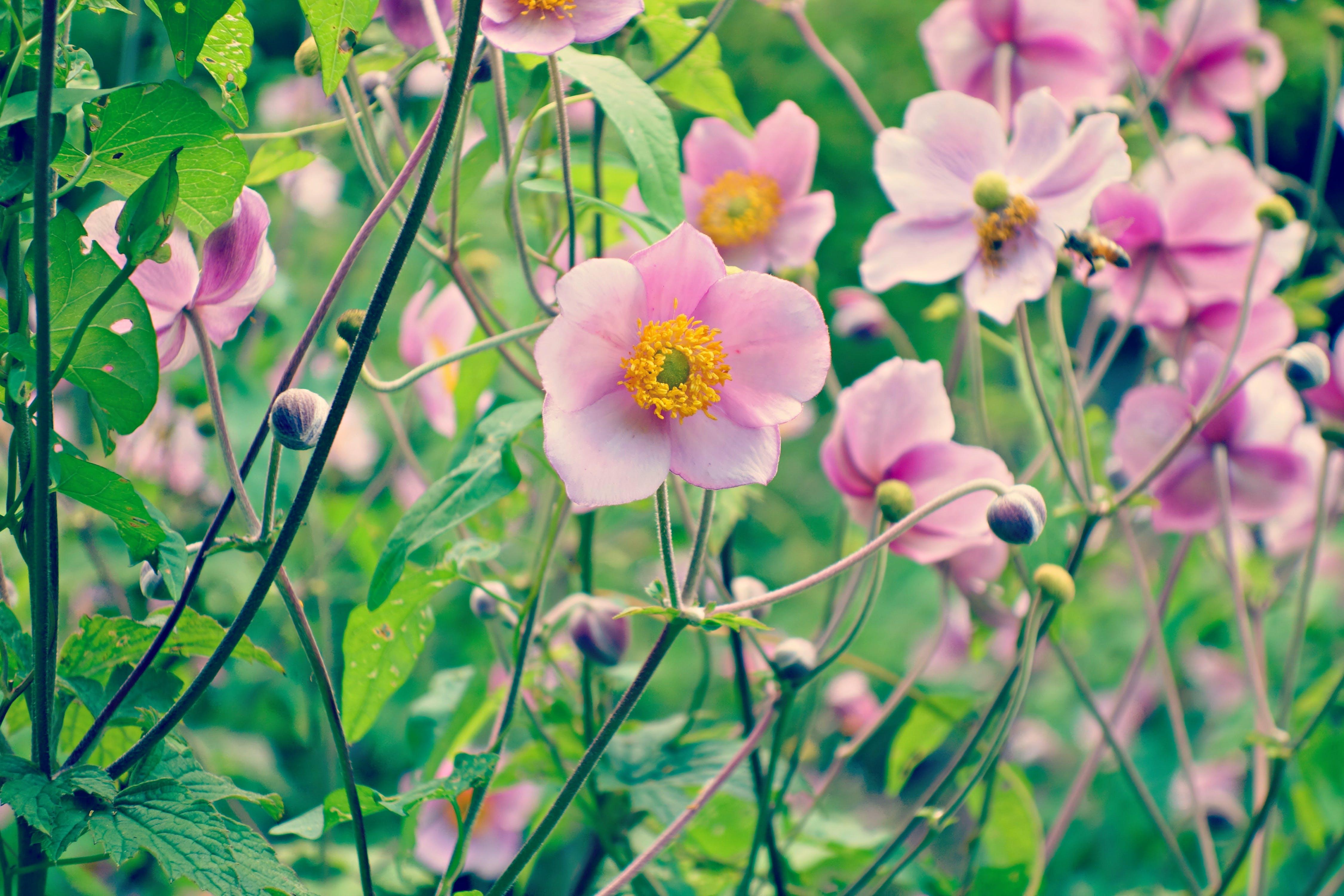 of blossom, flower, flower garden, garden