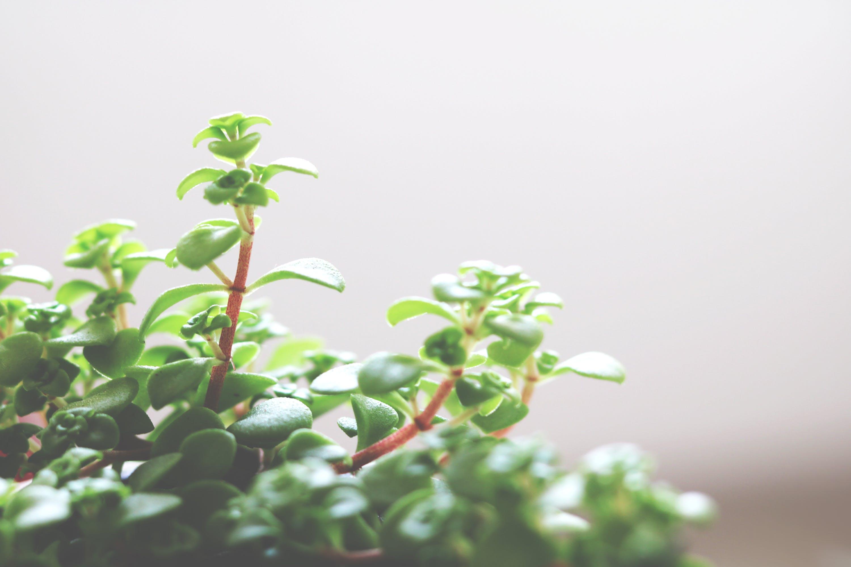 Kostenloses Stock Foto zu angenehm, blühende pflanze, dunkelgrüne pflanzen, friedlich
