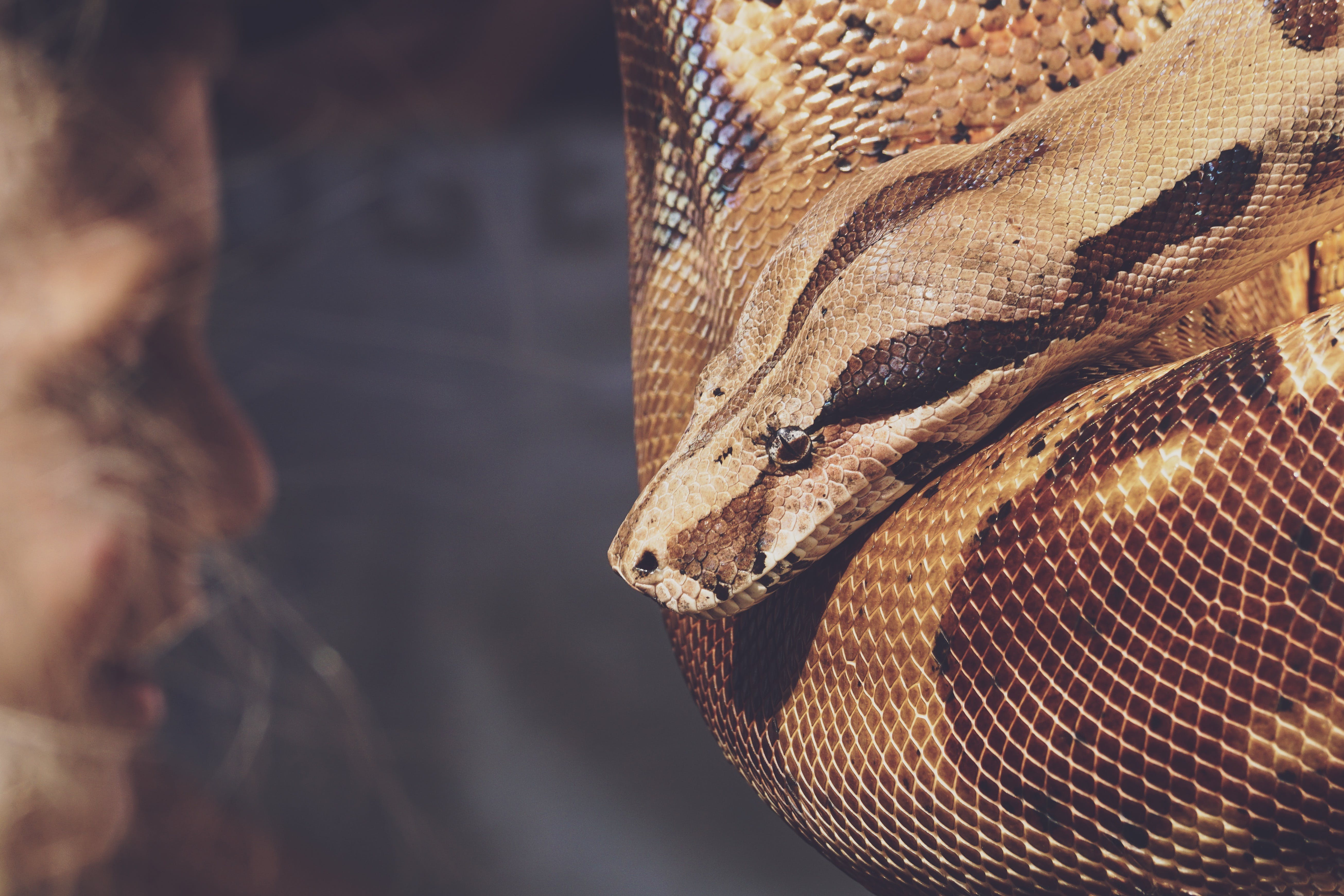Close-up Photo of Reticulated Python
