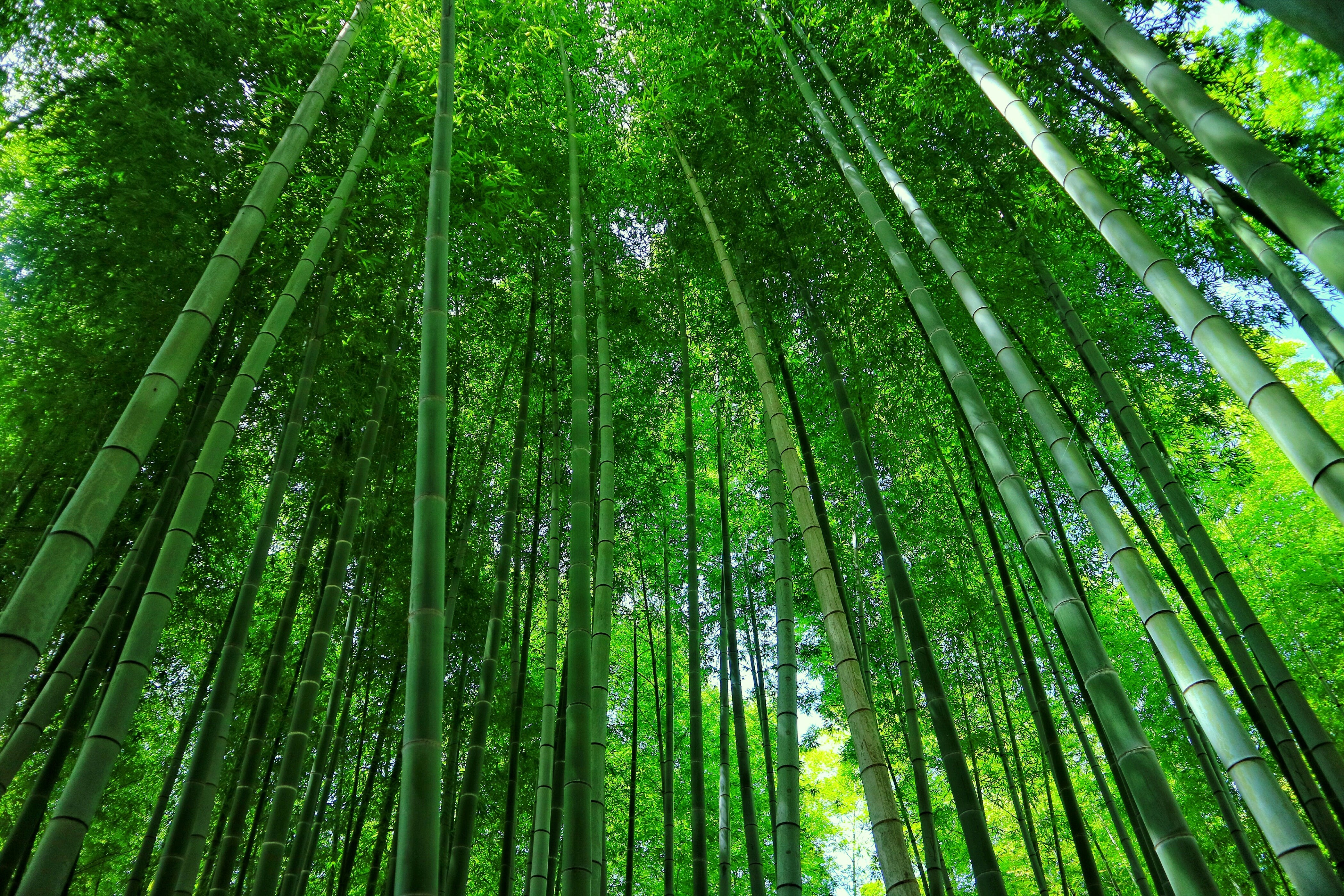 Free stock photo of forest, green, japan, japanese culture