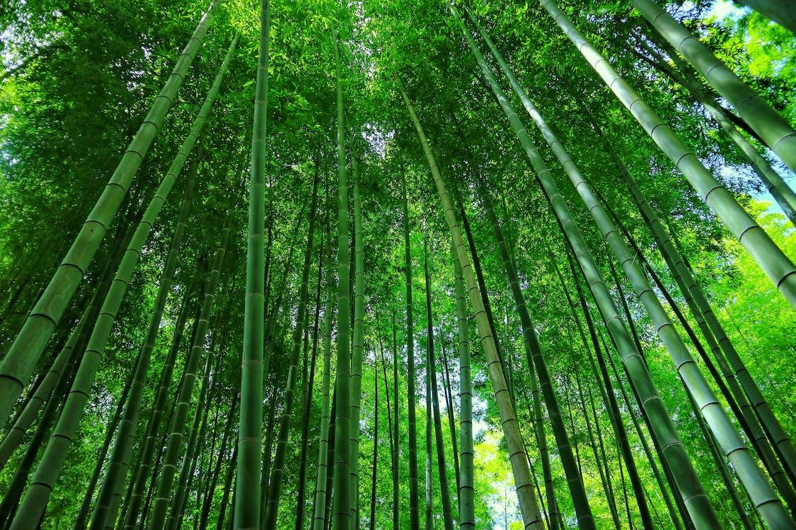 grön, japan, japansk kultur