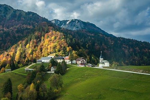 Foto d'estoc gratuïta de a pagès, arbres, bosc, boscos