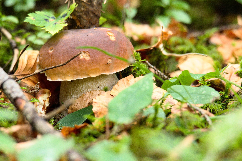 Výsledek obrázku pro houby v lese free