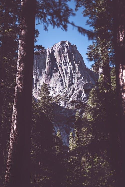 Imagine de stoc gratuită din arbori, cer, codru, lumina zilei
