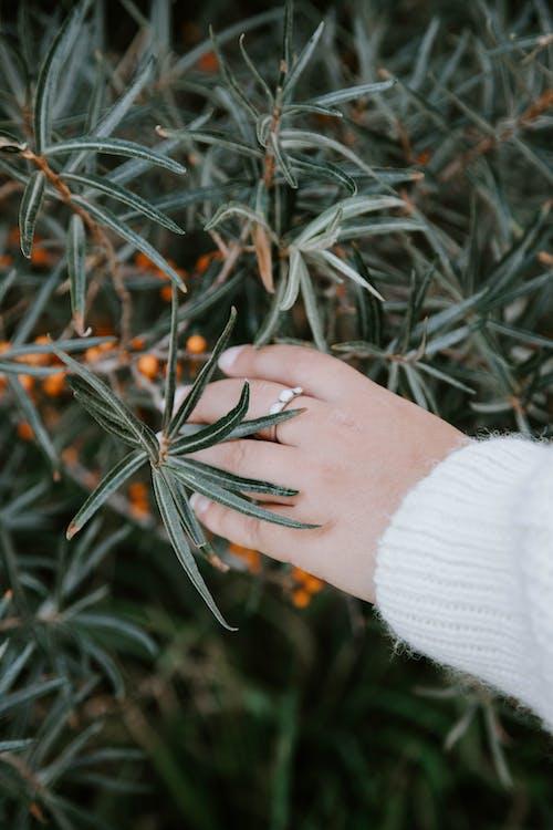 Darmowe zdjęcie z galerii z biżuteria, pierścień, ręka, roślina