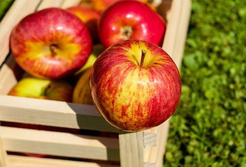 Ingyenes stockfotó almák, aratás, élelmiszer, étel témában
