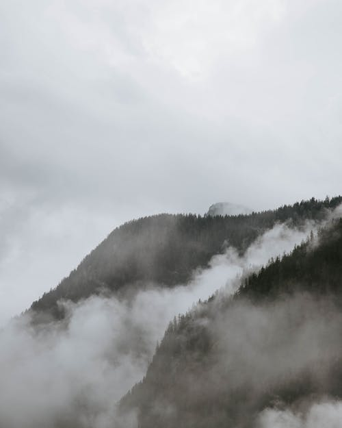 Mountain Surrounded by Trees and Fogs