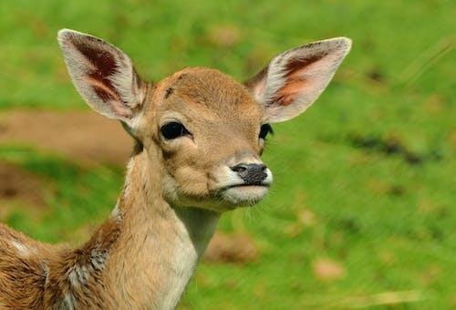 動物, 可愛, 特寫, 草 的 免费素材照片