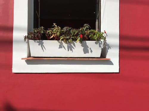 Pot Of Flowers On Window