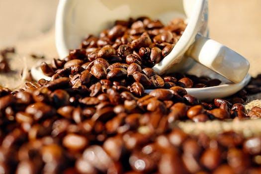 Brown Cocoa 183 Free Stock Photo