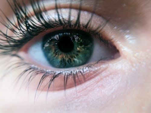 Foto profissional grátis de Adobe Photoshop, fotografia de pequenos seres, macri, olho