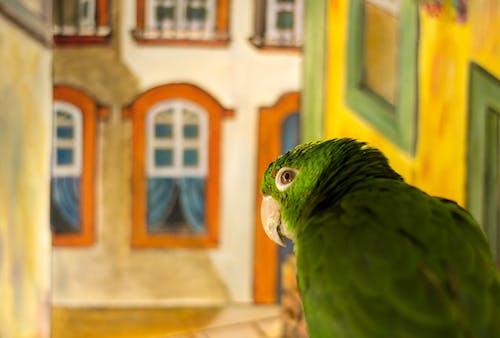 Fotobanka sbezplatnými fotkami na tému papagáj, príroda, zelený papagáj