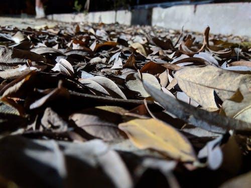 Free stock photo of closer look, foliage, old foliage