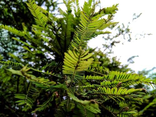 Free stock photo of evergreen, foliage, nature photography