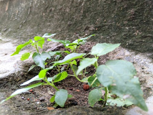 Free stock photo of flora, funa, green leaf