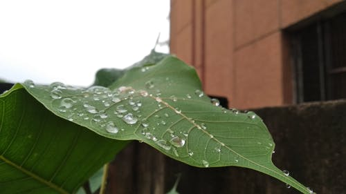 Free stock photo of green leaf, water droplets