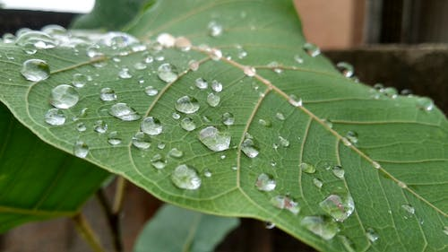 Free stock photo of green leaf, water droplets, water droplets on leaf