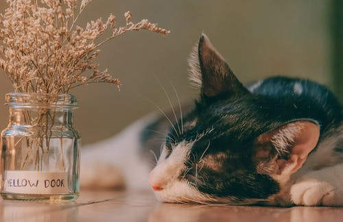 Selective Focus Photography of Cat Lying Next to Glass Jar