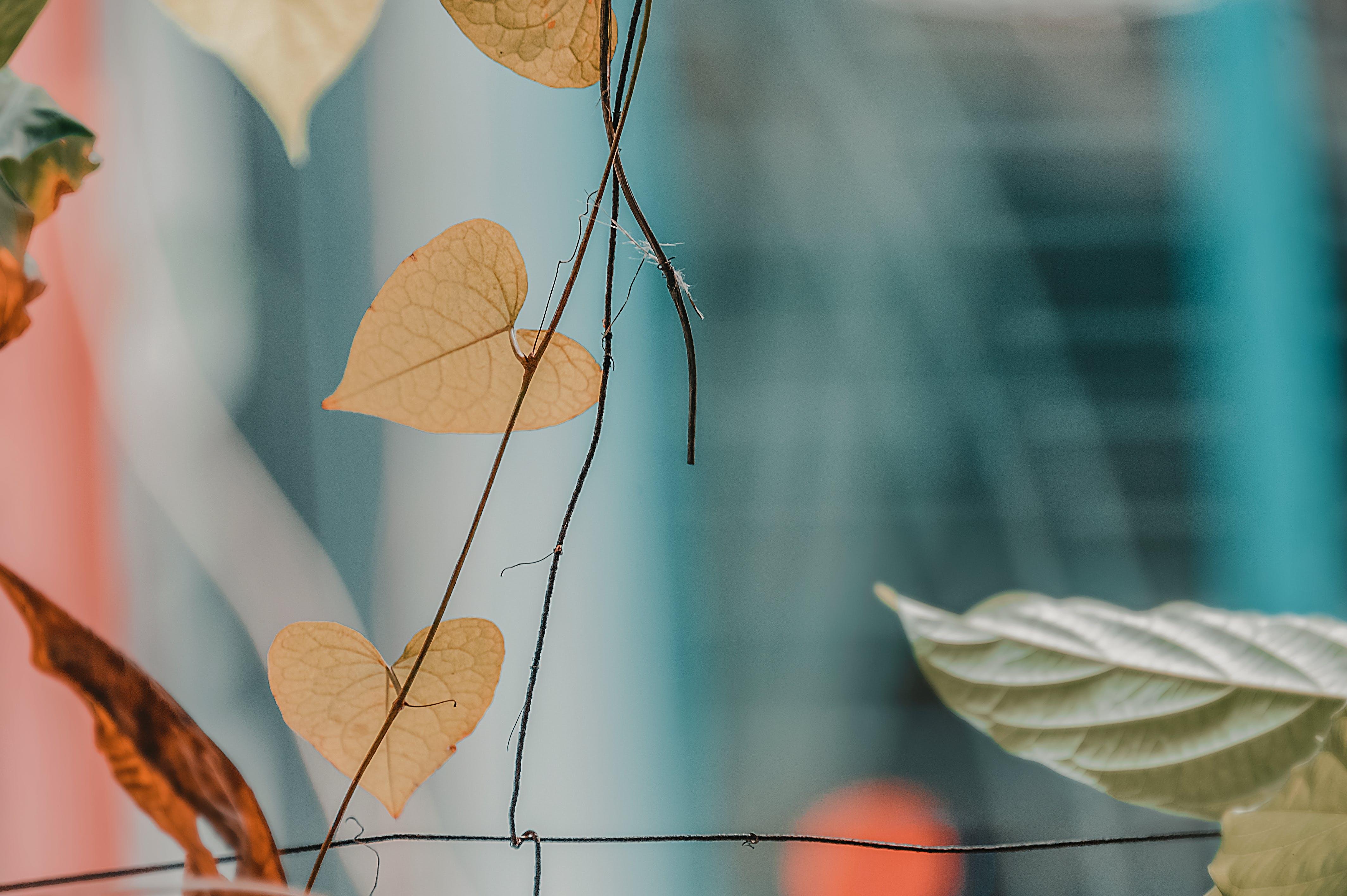 Ovate-shaped Beige Leaf
