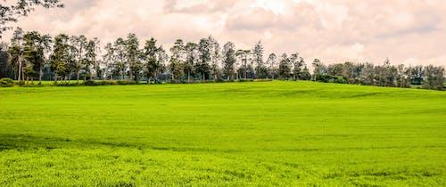 ケニア, リフトバレーハイランド, 緑の景色の無料の写真素材