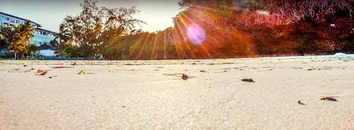 ケニア, モンバサ北海岸, 太陽の下で白い砂浜, 干潮の無料の写真素材