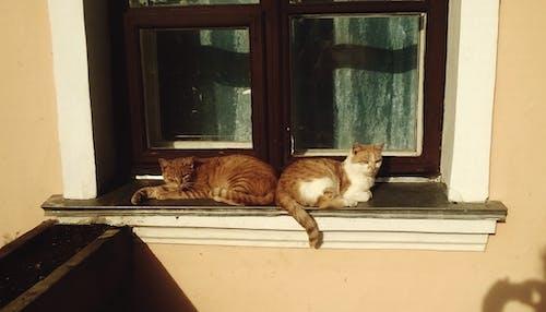 Free stock photo of cats, orange, pretty
