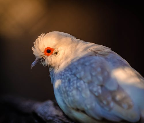 Selective Focus Photo of Diamond Dove