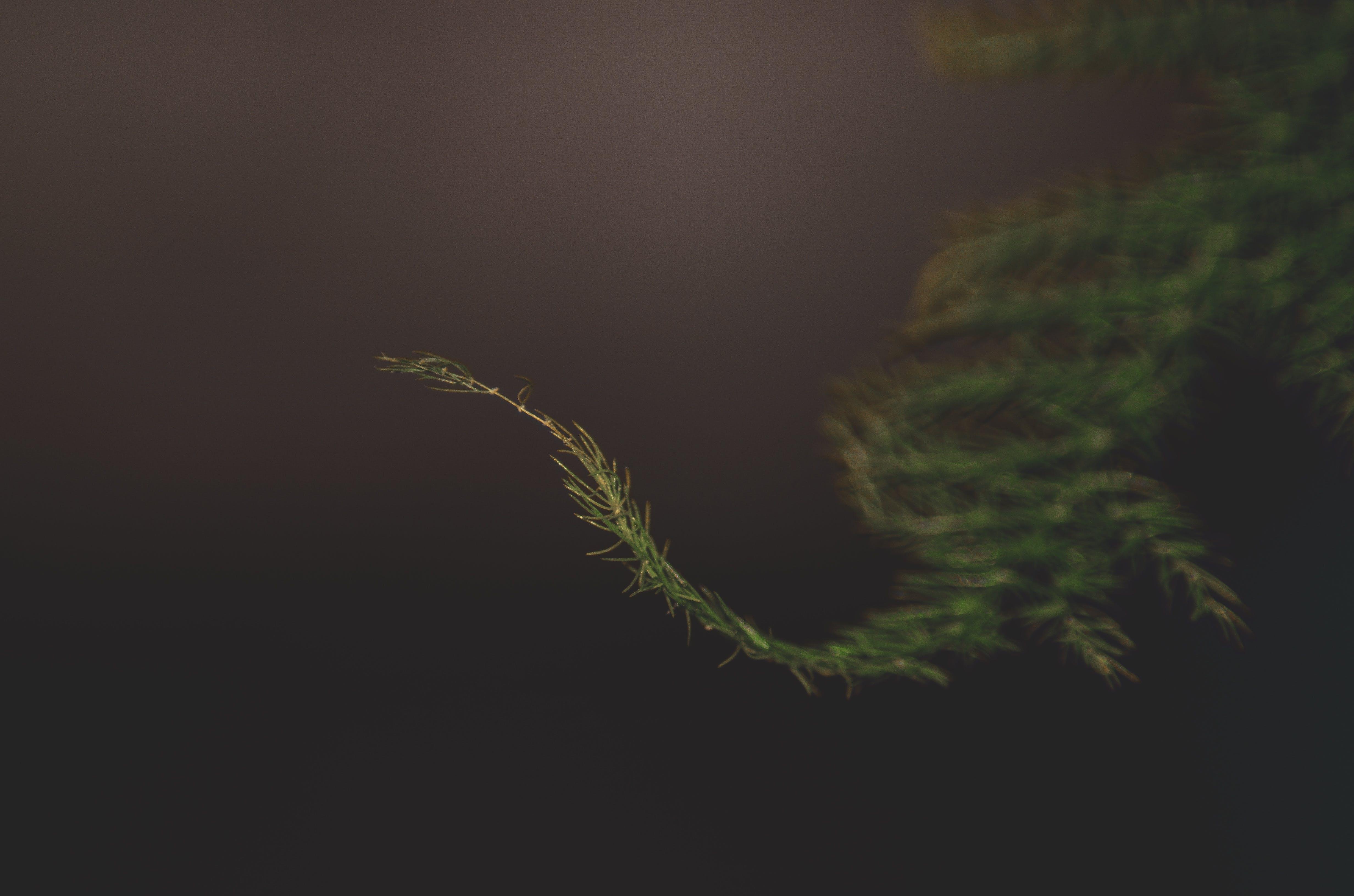 Kostenloses Stock Foto zu pflanze