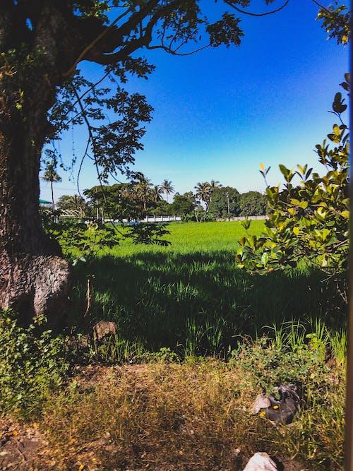 Kostenloses Stock Foto zu der grünen wiese, der grünen wiese, natur, natur wallpaper