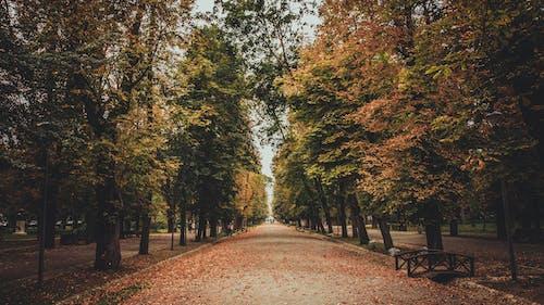 Gratis stockfoto met bomen, bossen, daglicht, landschap