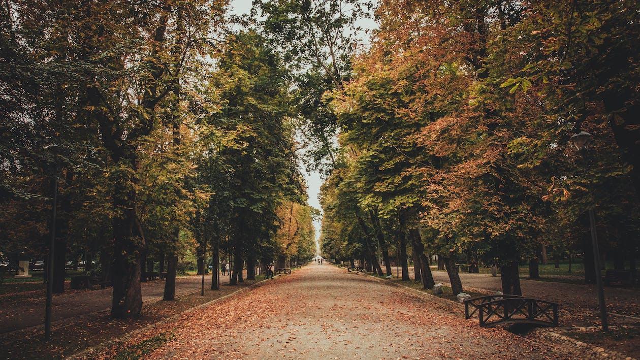 arbres, bois, chemin