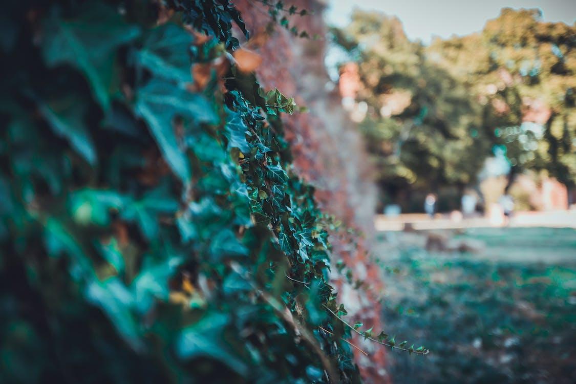 arbres, colors, fons desenfocat