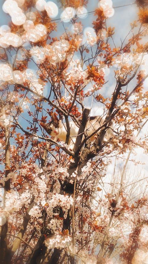 Foto stok gratis kucing, pohon mekar, wallpaper tumblr