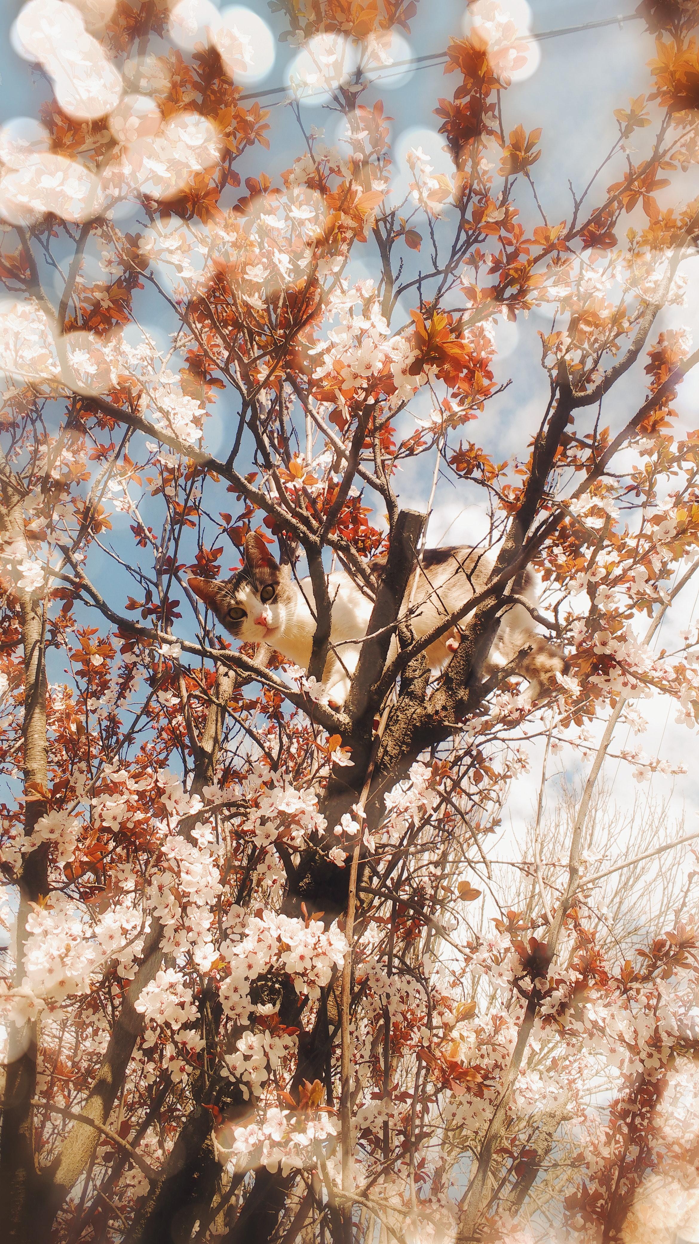 Kostenloses Foto Zum Thema Blühender Baum Katze Tumblr